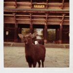 奈良に行ってきたんですが。